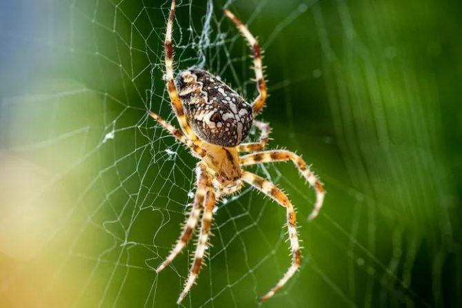 Oamenii care se tem de păianjeni îi văd ca fiind mai mari
